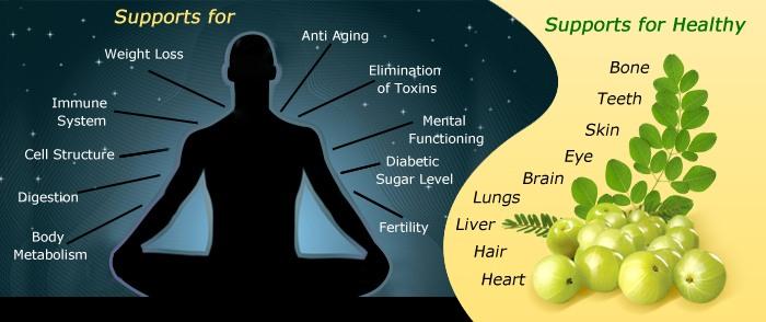 Image result for amla fruit benefits health
