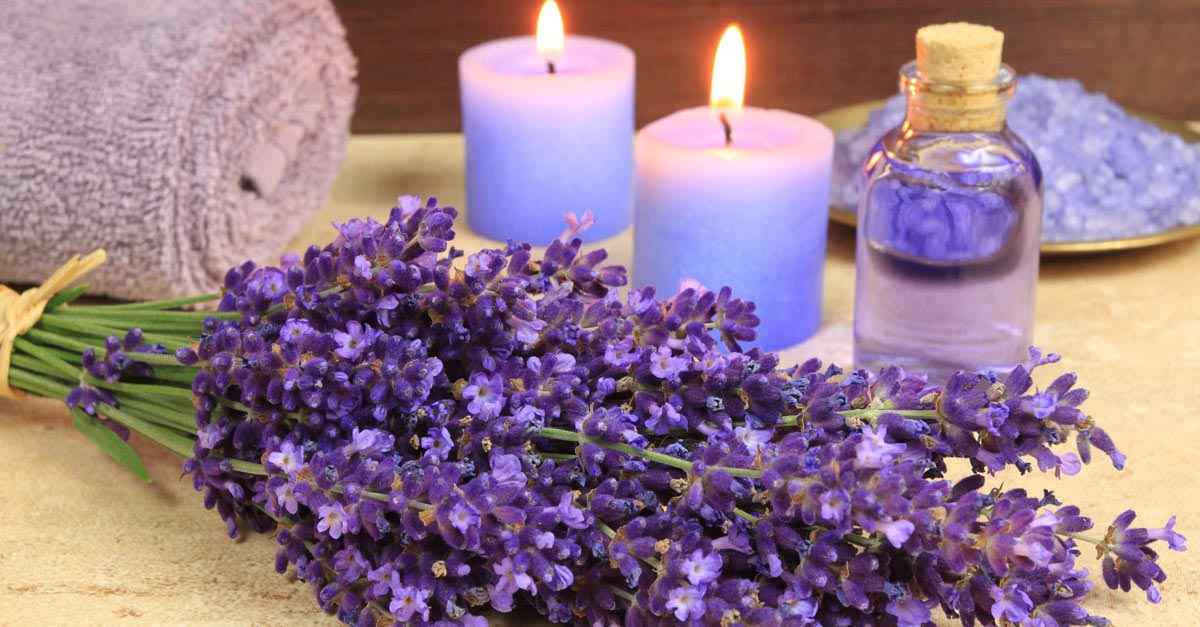 Image result for lavender oil