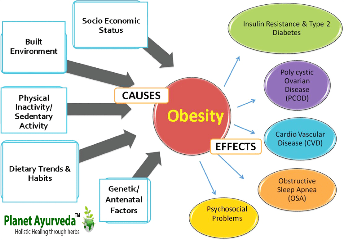 obesity and social determinants of health essay