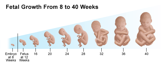 Pregnancy information for first time Mothers