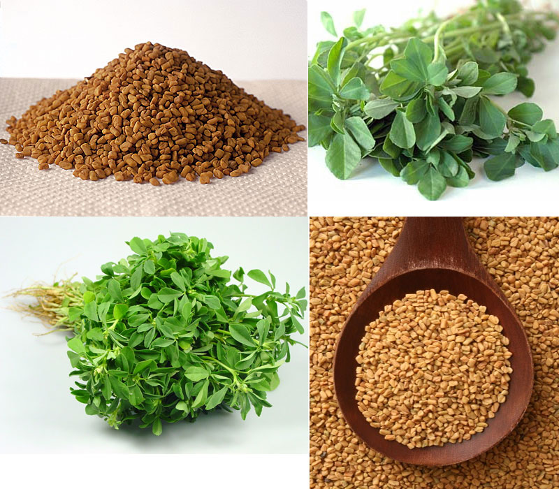 5 Health Benefits of Fenugreek Seeds - Ayurveda and Yoga