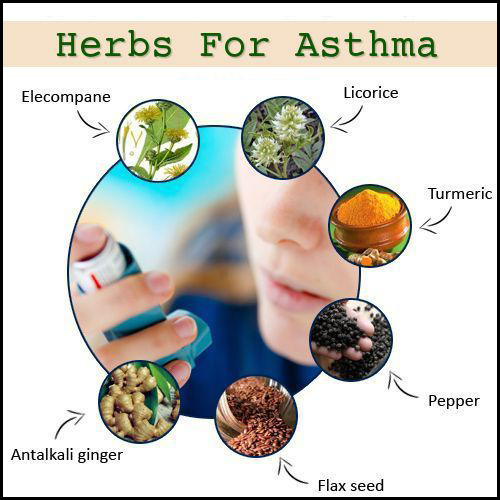 Top 10 Herbs for Treating Asthma | Top 10 Home Remedies