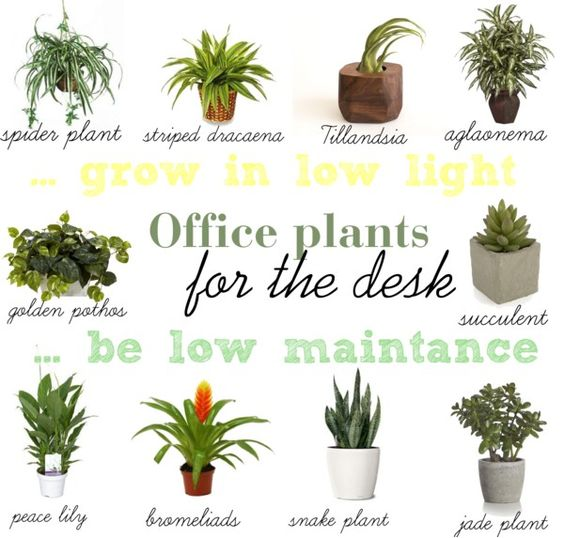 importance of having plants at office - Office Plants